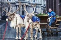 CitySprint trials reindeer delivery to tackle record numbers of deliveries this Christmas